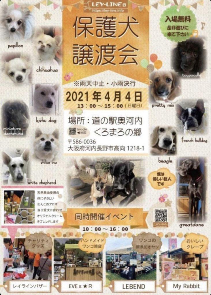 保護犬譲渡会 2021年4月4日